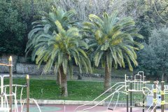 groupe-palmiers-07a.jpg