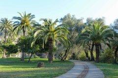 groupe-palmiers-08b.jpg