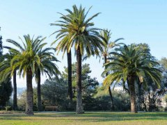 groupe-palmiers-11b.jpg