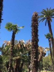 Nice-30-avril-2017-parc-Vigier05.jpg