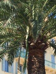 Nice-30-avril-2017-parc-Vigier09.jpg